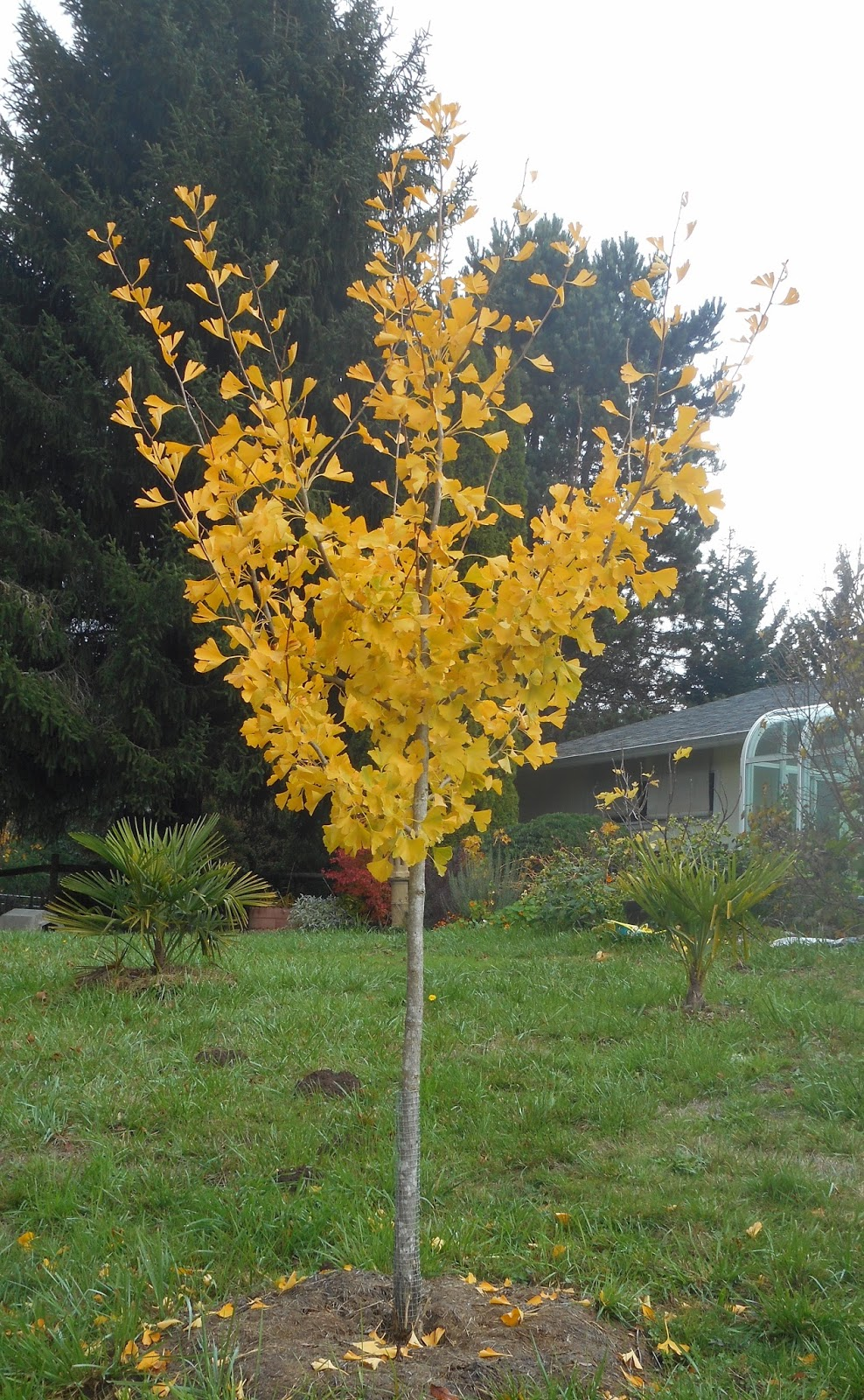 Growing Greener in the Pacific Northwest: 2015