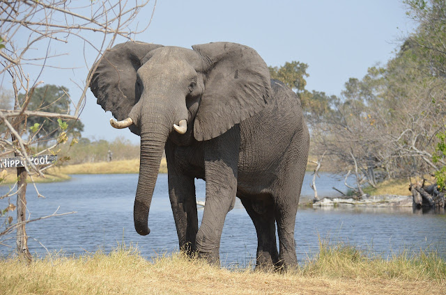 The African elephant pool