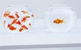 personality quiz fish