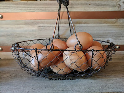 Farm fresh eggs in a basket | forcing a hen to lay