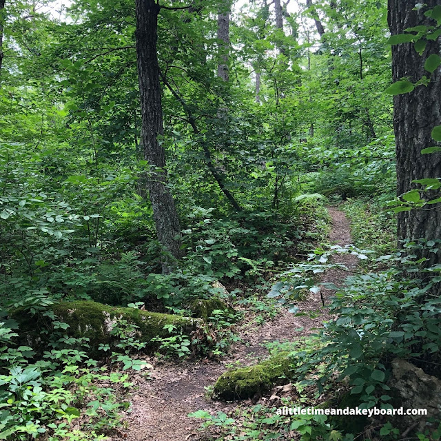 Windy trails welcomed us to the dense forest at Blue Mound State Park
