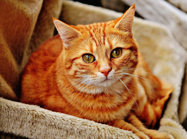 The facts behind a cat's nine lives