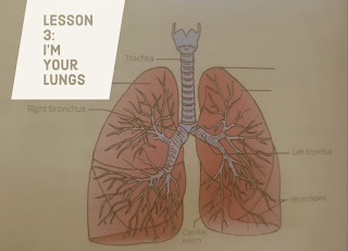 I am your Lungs Questions answers, Class 5 English NCERT