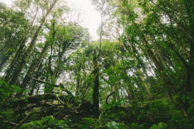 Hutan Suaka Alam, Hutan Konservasi, Contoh Hutan Suaka Alam, Contoh Hutan Konservasi