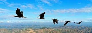 Kuşların Uçuş Prensibi