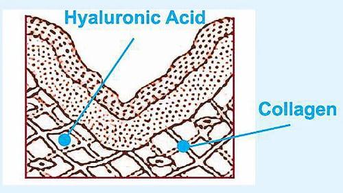 HA cung cấp dinh dưỡng, tăng cường sản sinh Collagen, đồng thời giữ nước giúp chống lão hóa