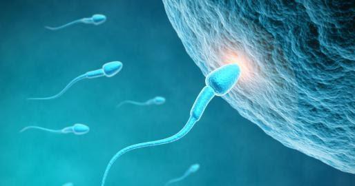 Hasil gambar untuk Fakta Mengenai Sperma Encer Dan Cara Mengujinya