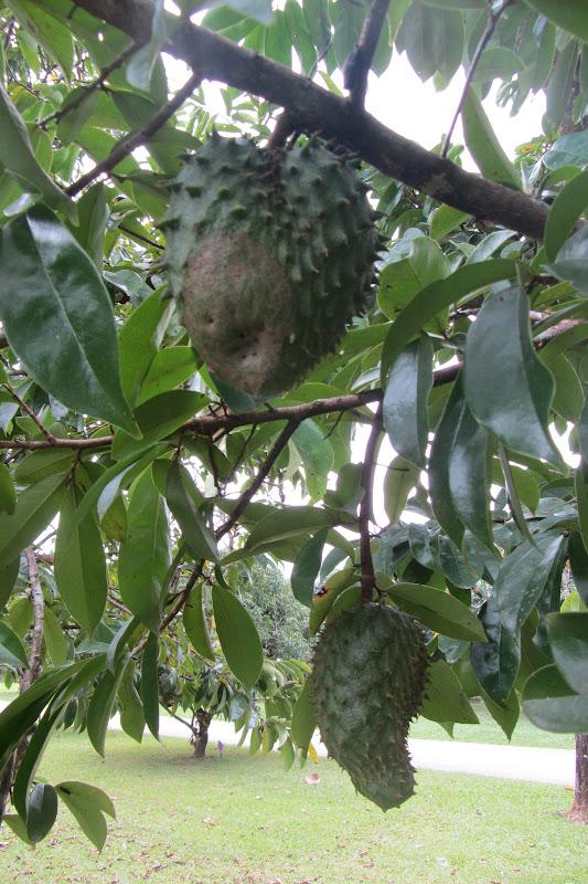vögel bauen nester mit früchten
