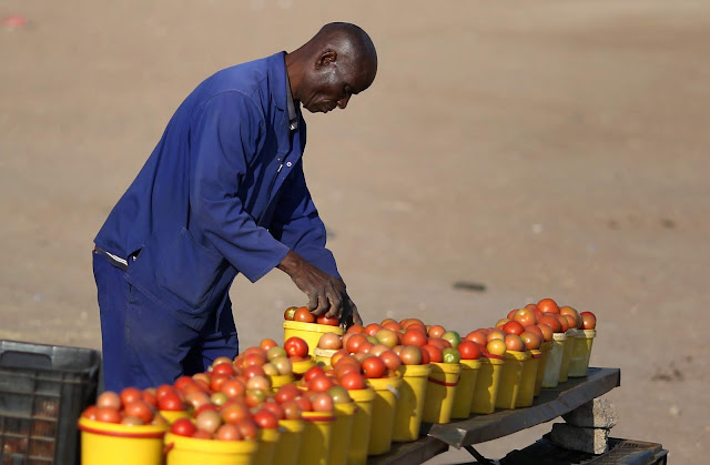 Image of African man arranging his tomatoes to sell.