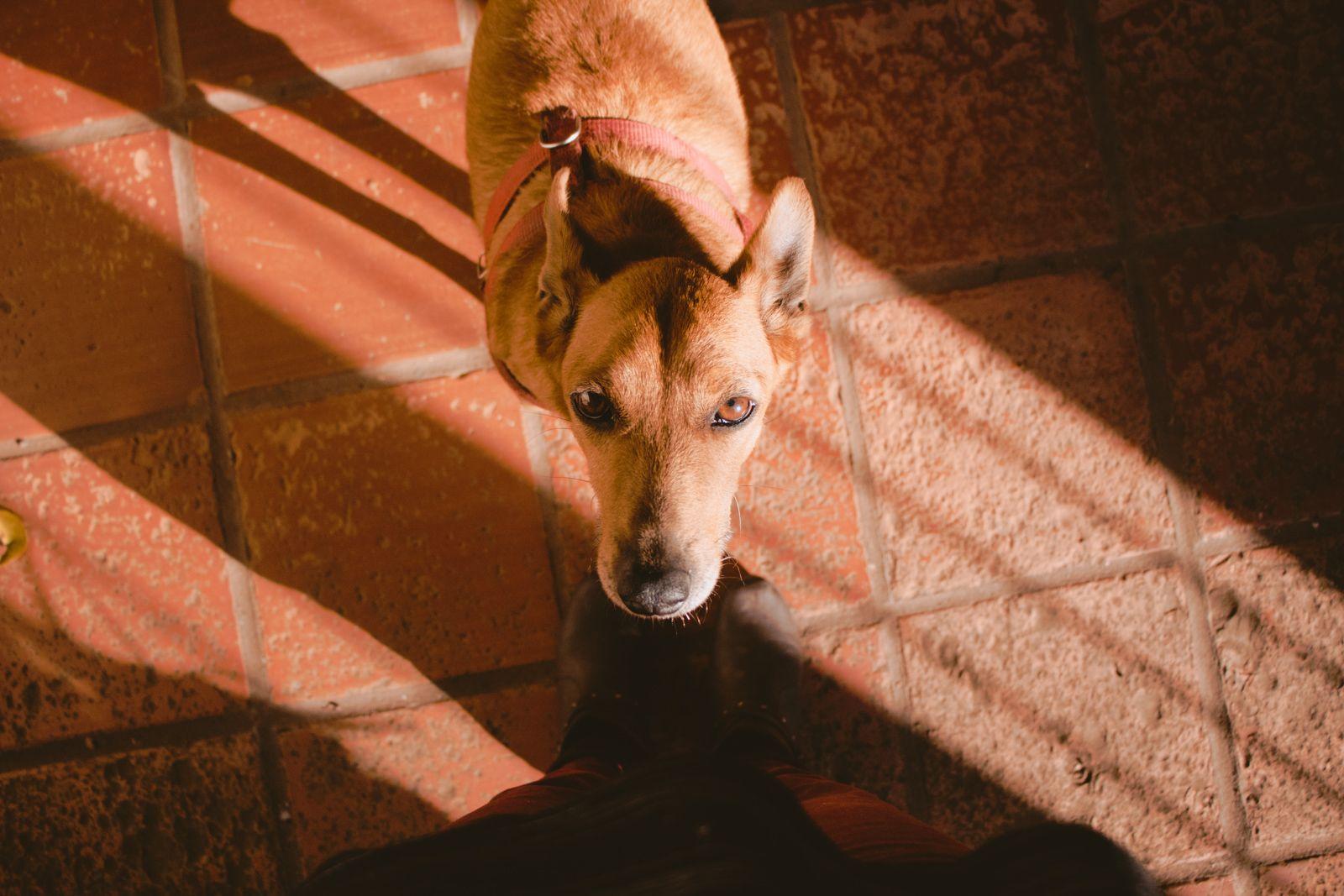 SNAPSHOTS #1 cachorra no sol