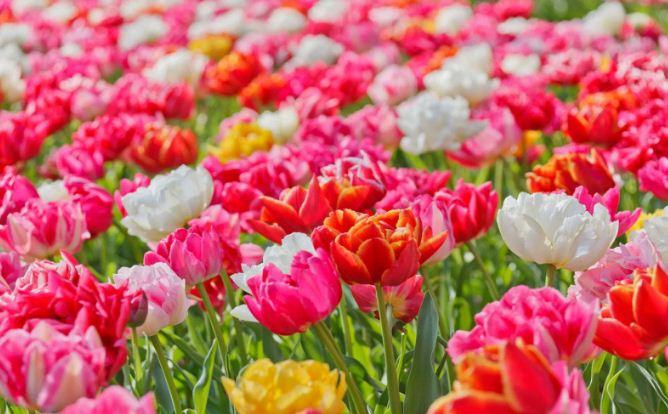 kosakata bahasa arab tentang bunga