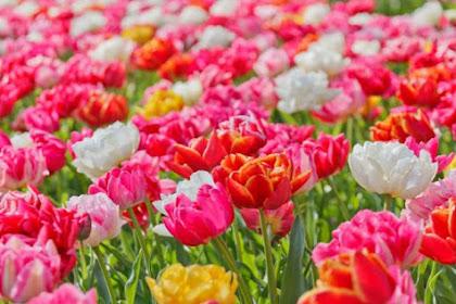 50 Nama Bunga dalam Bahasa Arab dan Artinya