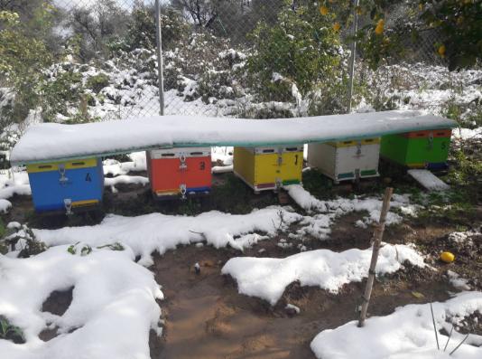 Τα μελισσάκια του Θοδωρή στο Αίγιο