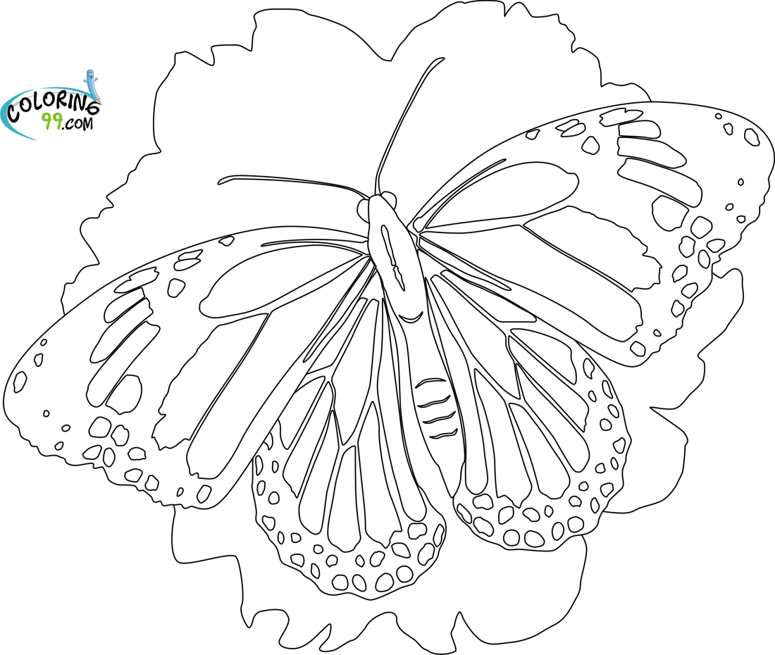 Butterfly Coloring Pages Team