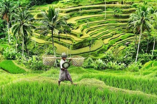 Petani Sukabumi Terus Didorong untuk Daftar AUTP