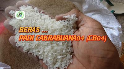 Beras Padi CAKRABUANA 04 (CB04)   Beras Putih Bening, Tidak Berkapur.   Rasa Nasi Super Pulen