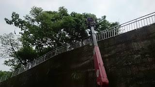 提供樹木修剪及鋸樹服務的桃園清潔公司及新竹清潔公司