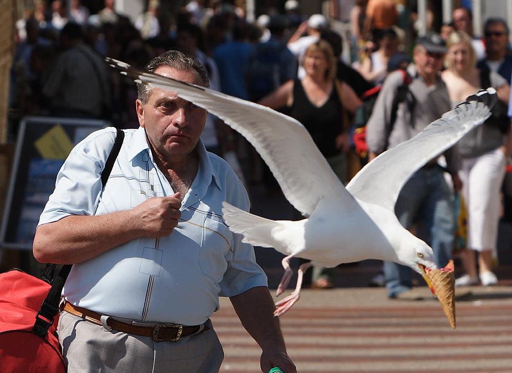 pássaro roubando comida