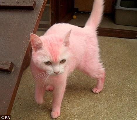 Bit Of Sugar Cute Or Cruel Dyed Animals