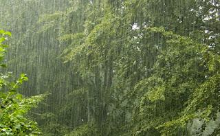 manfaat-air-hujan-bagi-kehidupan-dan-kecantikan.jpg