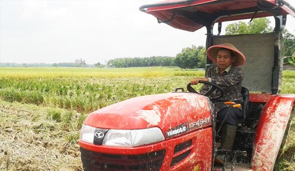 Puluhan Hektar Lahan Perkebunan Siap Dialihfungsikan Menjadi Lahan Pertanian