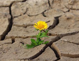 Grieta, flor en la grieta