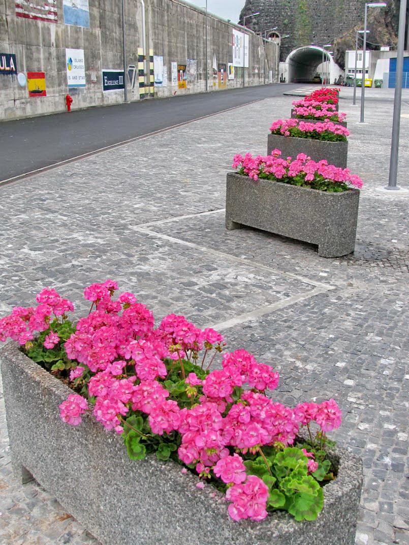 flowers in Funchal port