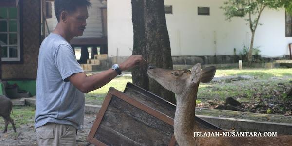 wildlife monitoring taman nasional ujung kulon banten