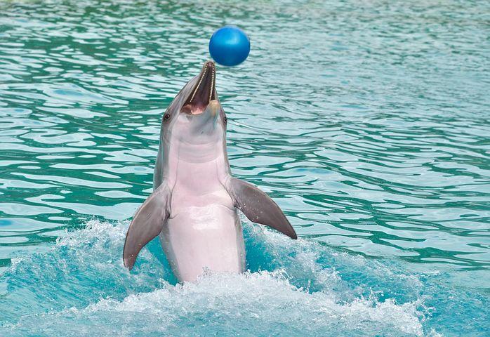 Amazing Herd of Dolphins