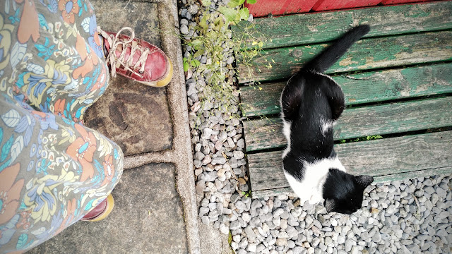 cat, shoes, looking down