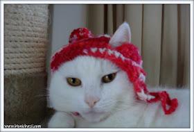Friday Fluffers at BBHQ ©BionicBasil® Angel Snowies Red Hat Fail