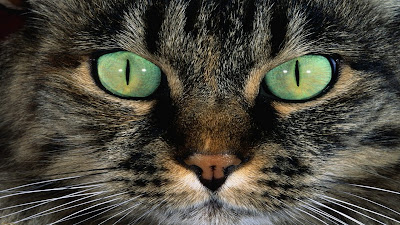Olhos de gato FHD