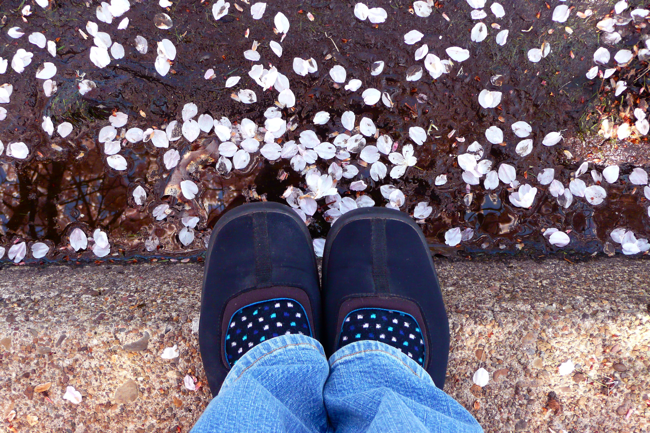 plum blossom petals, old Keds, concrete, reflection
