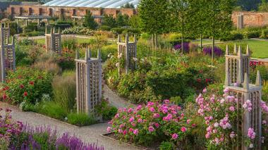 Rosas y plantas herbáceas perennes en el jardín amurallado de Wynyard Hall