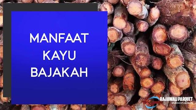 4 manfaat kayu bajakah bagi kesehatan