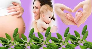 فوائد الميرمية للحامل