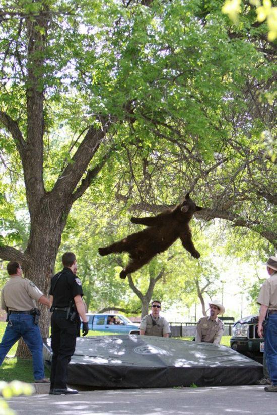 urso engraçado