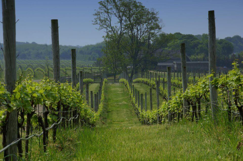 7 Most Beautiful Vineyards on Long Island