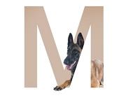 nombres para perros originales