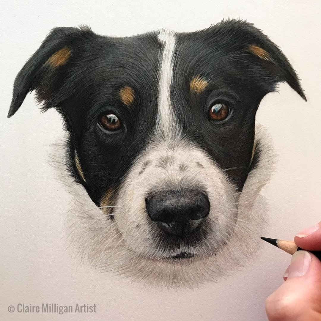 10-Border-Collie-Mix-Claire-Milligan-Cats-birds-and-Dogs-Realistic-Animal-Drawings-www-designstack-co