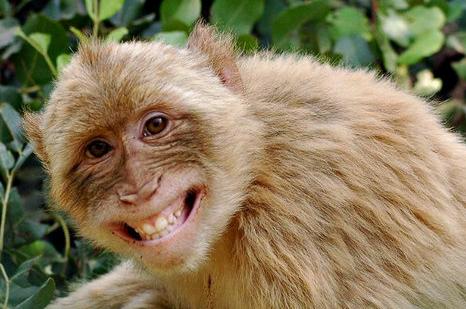 Unduh 67+ Gambar Hewan Monyet Paling Baru Gratis