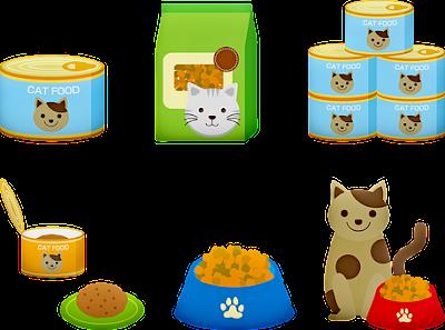 Best kitten food for 2019