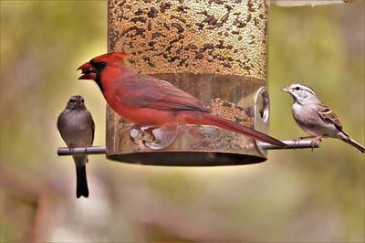 Photo of birds at bird feeder. GeorgeB2 from Pixabay
