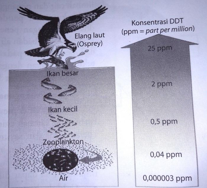 Peningkatan-akumulasi-bahan-pencemar-misalnya-DDT