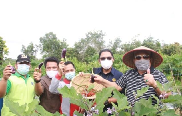 Bupati Tanjab Barat Panen Raya Organik di Desa Lubuk Terentang