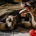 اسباب التهاب المفاصل عند الكلاب