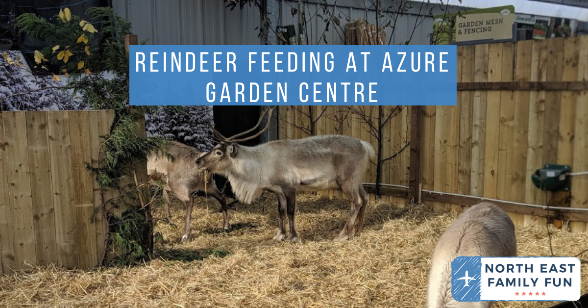 The Reindeer Retreat Cafe & Feeding Reindeer at Azure Garden Centre, Cramlington