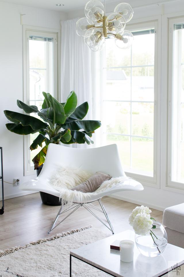pholc kattovalaisin, banaanipuu, villa h,