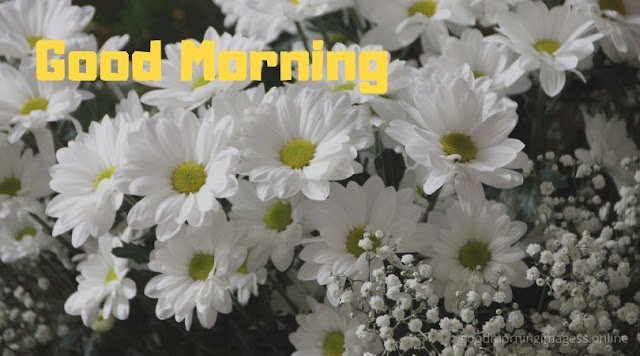 good morning images with white flowers, good morning flowers pictures, good morning images with flowers hd, good morning rose images download, good morning photos hd