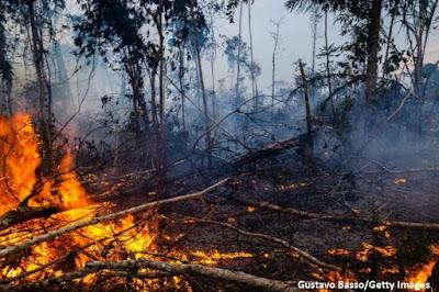 Desmatamento na amazônia, Fogo na amazônia, Bolsonaro, Ricardo Sales, Amazônia, meio ambiente, Sales, natureza